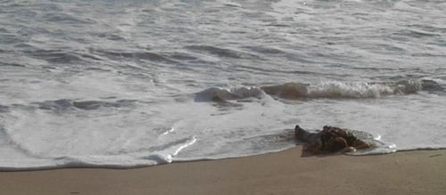 NAVY SEALS Wake Up Ocean