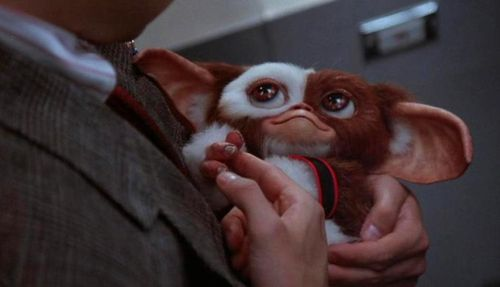 GREMLINS 2 Gizmo and Billy