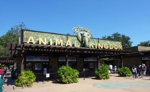 Animal Kingdom 1
