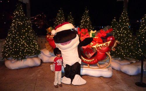 Sea World's Christmas Celebration 23
