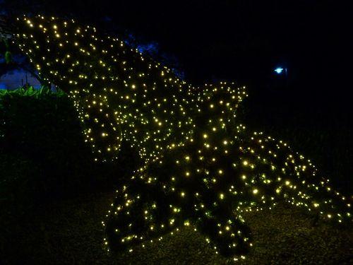 Sea World's Christmas Celebration 13