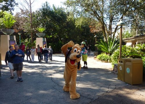 Disney's Animal Kingdom 12