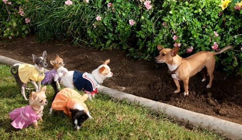 BEVERLY HILLS CHIHUAHUA 2 Papi and Kids