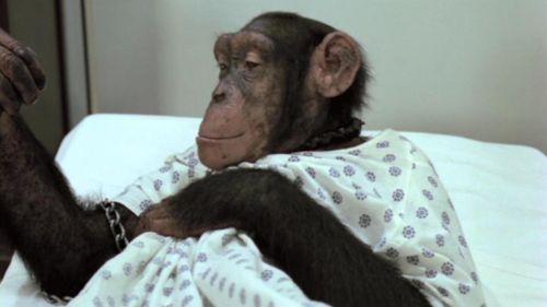 CARNIVAL MAGIC Chimp Suicide