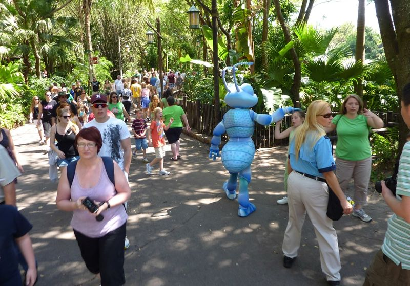 Disney's Animal Kingdom 43