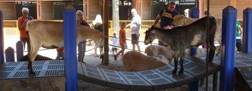 Disney's Animal Kingdom 29