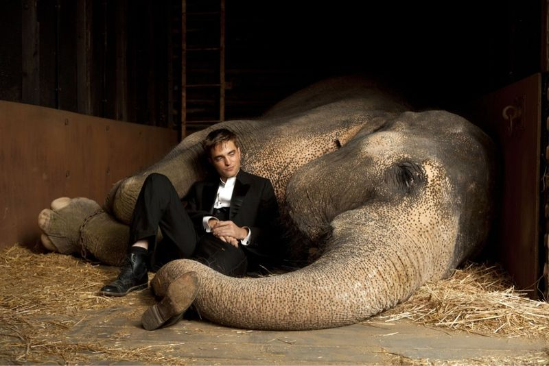 WATER FOR ELEPHANTS Robert Pattinson