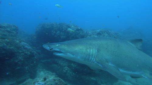 SHARKS 3D 4