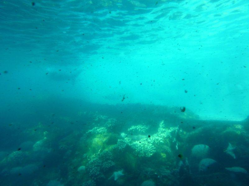 SEA WORLD ORLANDO 27