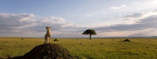 AFRICAN CATS Still 4