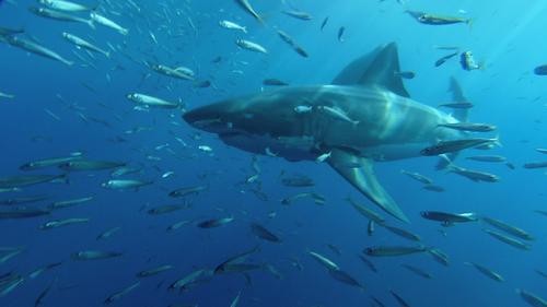 SHARKS 3D 2