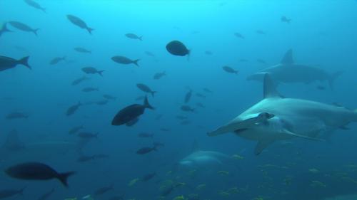 SHARKS 3D 1