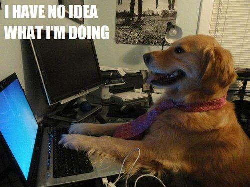 DOG CPU