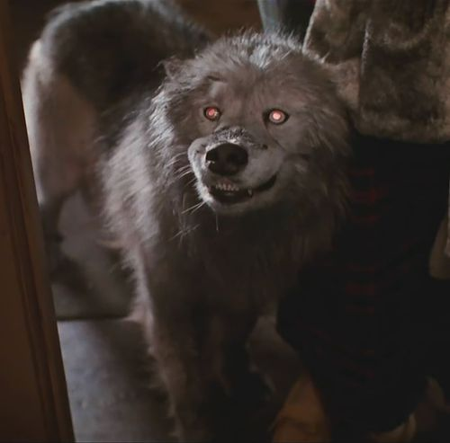 PET SEMATARY II Dog
