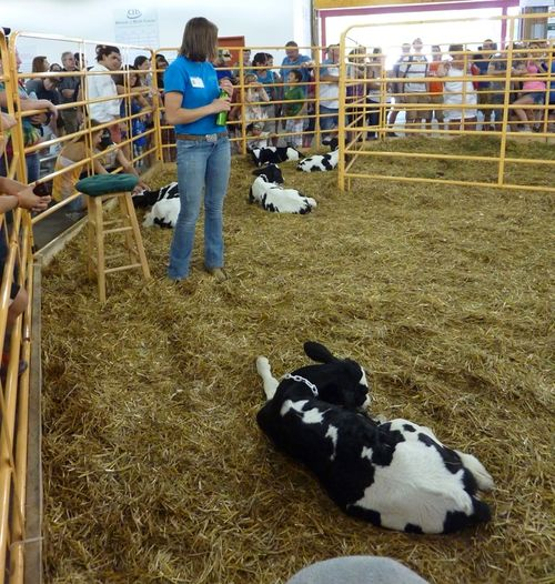 Minnesota State Fair 27