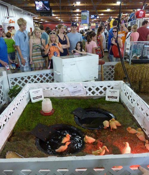 Minnesota State Fair 30