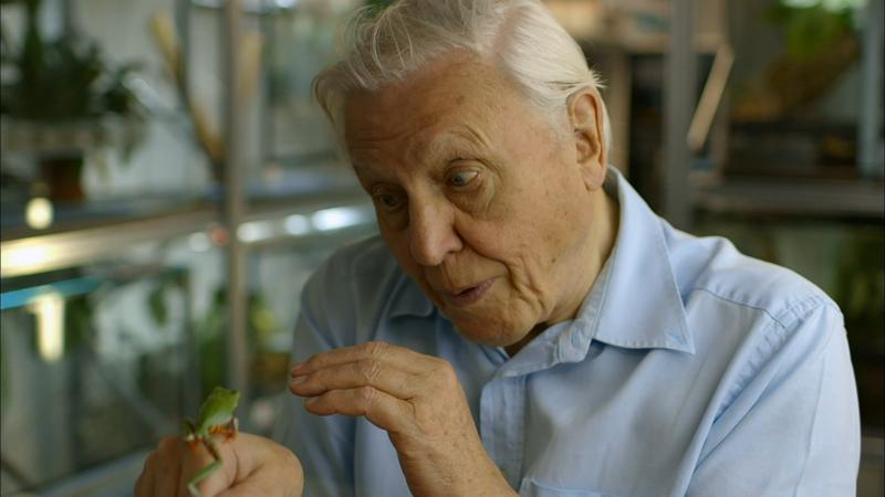 Fabulous Frogs David Attenborough
