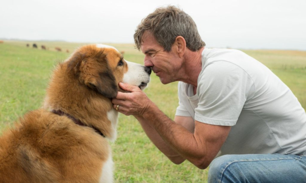 DOG'S PURPOSE 1