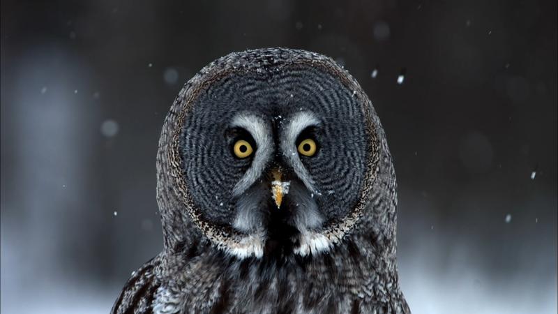 Nature Owl Power